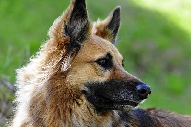 How To Choose The Right Dog Breed Uk
